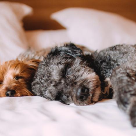 Over slapeloosheid en tips voor als je niet kan slapen